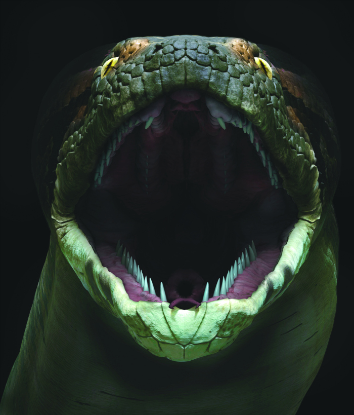Titanoboa, A Monster Snake Exhibit at  Academy of Natural Sciences of Drexel University - No Classroom Walls
