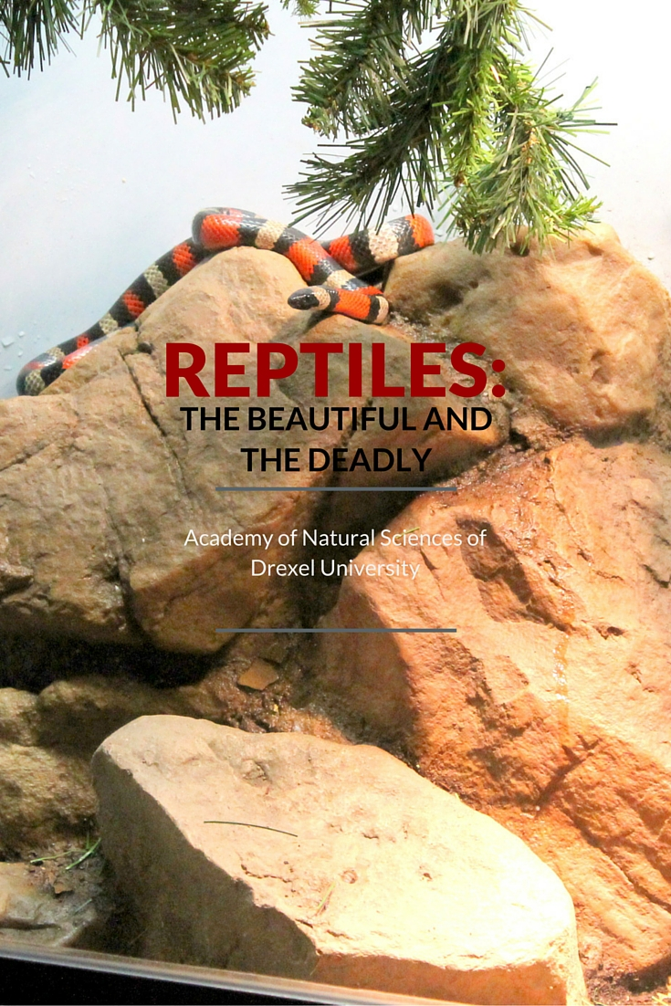 Reptiles: The Beautiful and the Deadly Academy of Natural Sciences of Drexel University