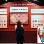 Tarantulas Alive and Up Close Entrance